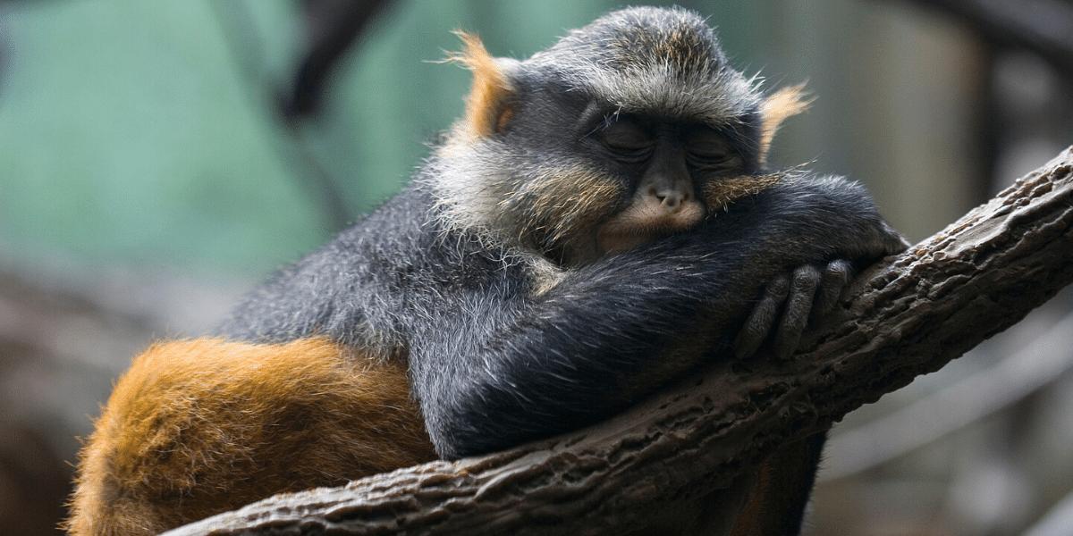 Le sommeil et ses répercussions sur la santé et la performance