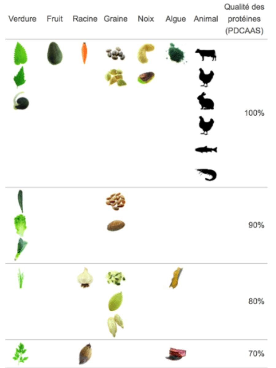 Où se fournir en protéines ? Digestibilité