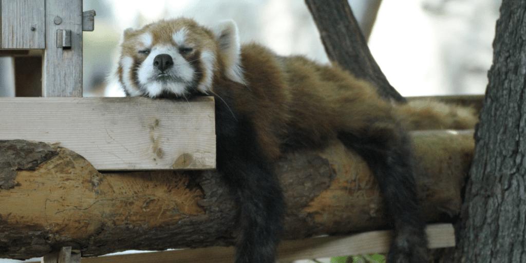 Comment mieux dormir naturellement ?